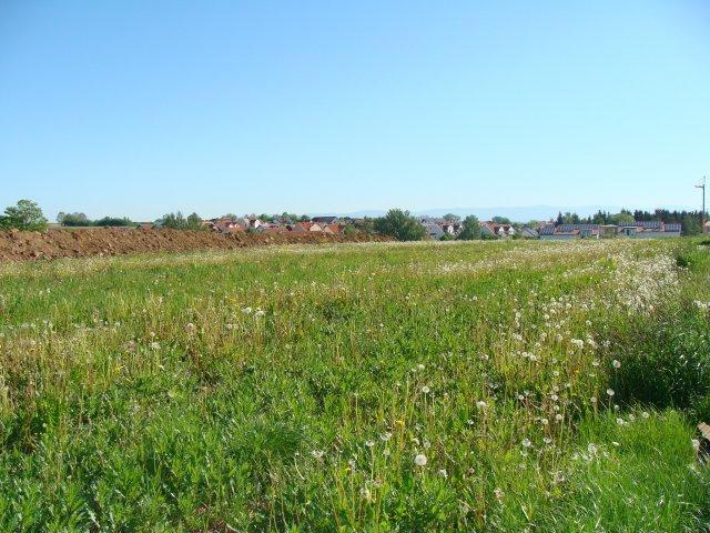 Wohngebiet »Birkenhügel«