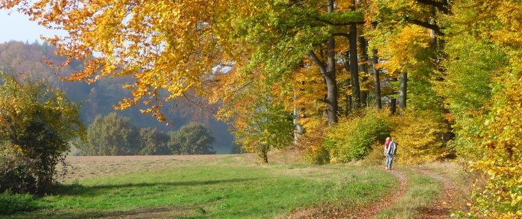 Herbst in Fischbachtal (Foto: S. Kühn)