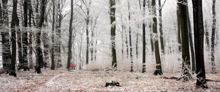 Wandern im Winterwald (Foto: S. Kühn)