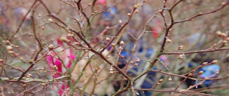 Blaubeerenpflanze in Egelsbach