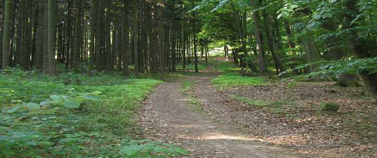 Gründauer Wald